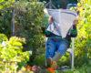 Man reading paper in garden